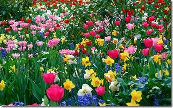 poze primavara-flori-culori