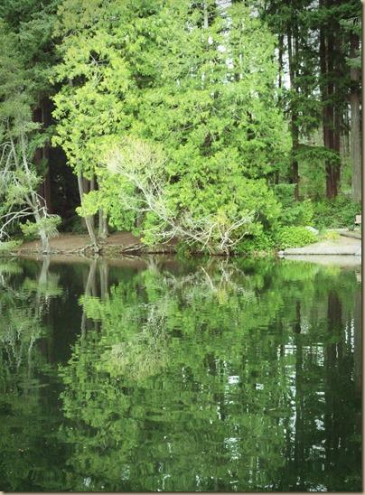 Pine Lake 2