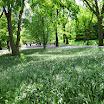 View of Brooklyn Botanic Garden - NYC
