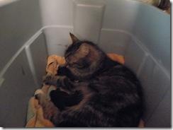 kittens day 1-3  08