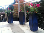 May 19 - Blue pots with geraniums