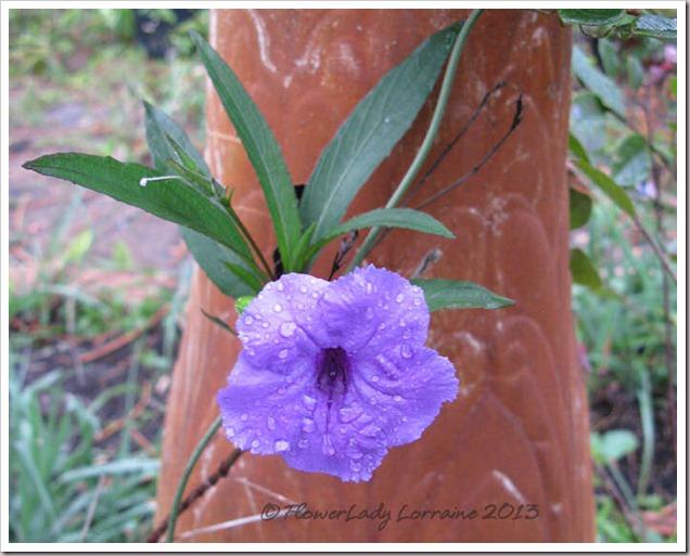02-14-phil-violet