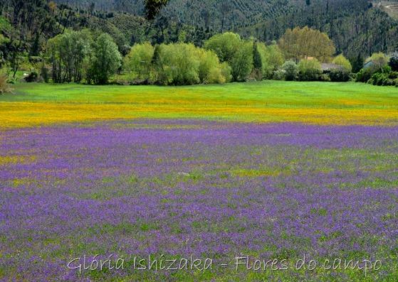 Glória Ishizaka - flores do campo 4