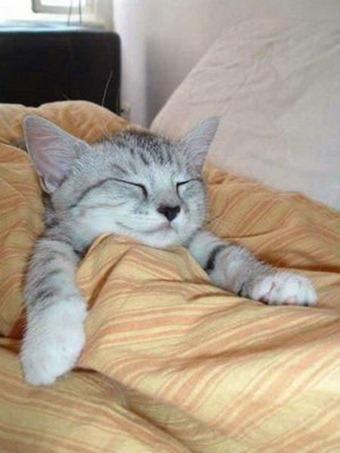 Cats Will Sleep Anywhere 21