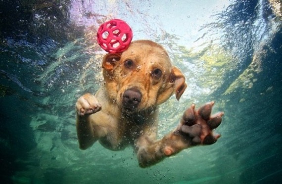 underwater-dogs-photography-14
