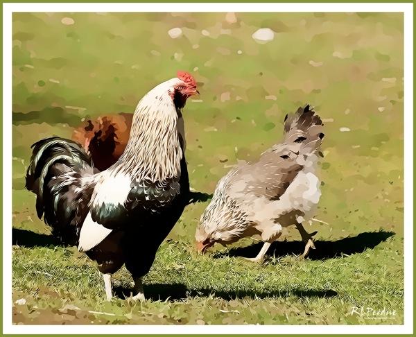 Farm series r1g