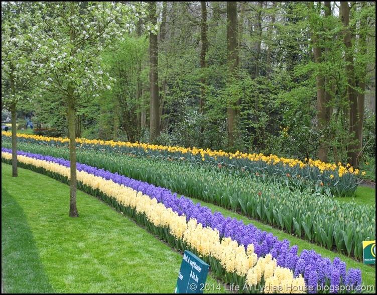 Keukenhof Gardens 14