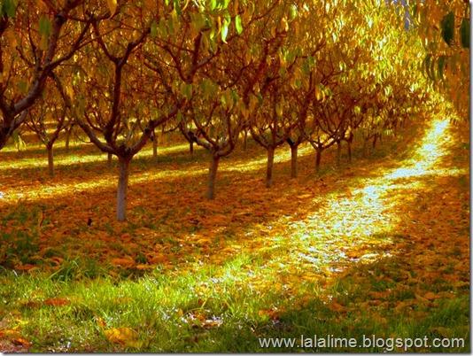 1-October-2012-Walk2