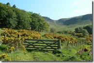 hill gate