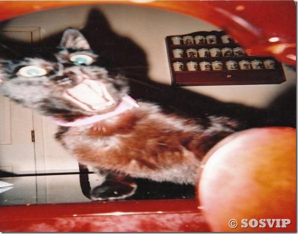 Animais engraçados curiosos legais (59)