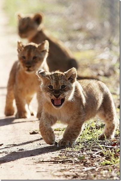 funny-animals-cute-23