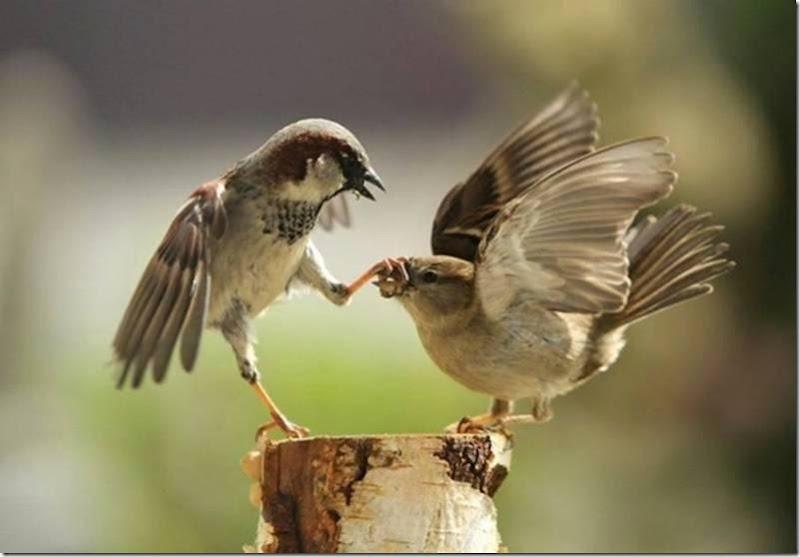 fotos animales divertidas patatitasylimones (26)