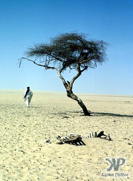 tree-of-tenere-7