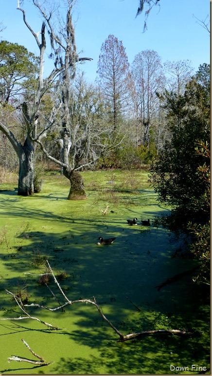 Magnolia Plantation_297