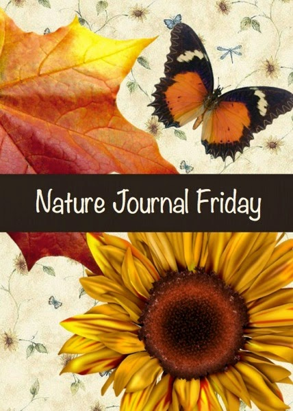 Nature Journal Friday - Squirrels | From Blue Bells and Cockle Shells