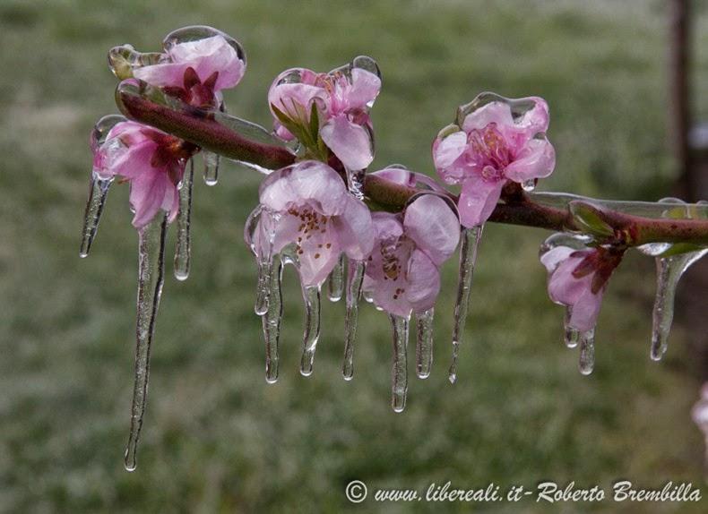 2014-03-3-25_Pesco ghiacciato_Villa di Tirano (38)