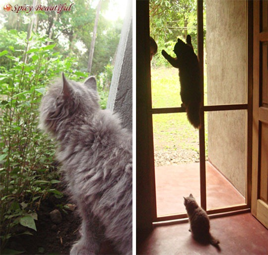 On the Left: Zavi sniffing plants | On the Right: Laguum testing her climbing skills while Skorpi watches