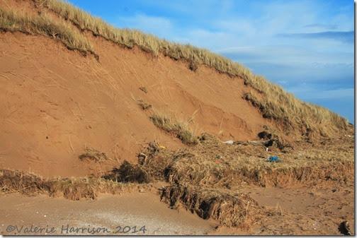 91-damaged-dunes