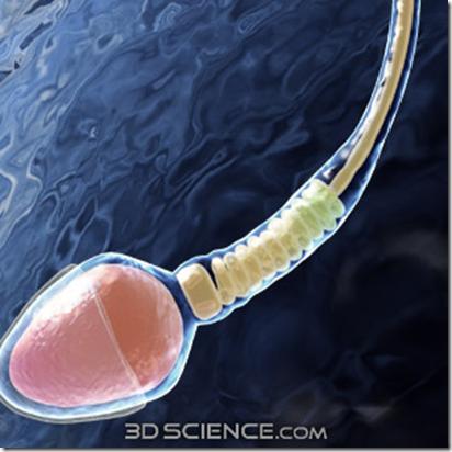 Подвижность сперматозоидов после спиртного