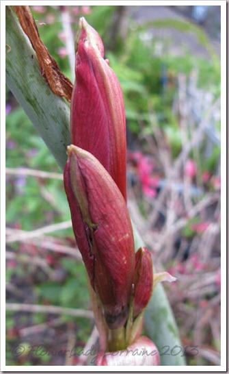 04-10-daylilies