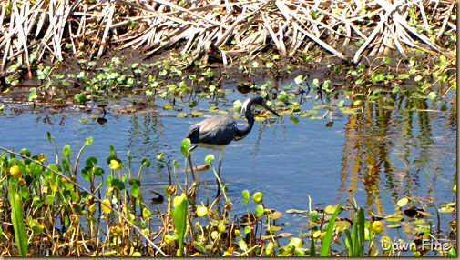 OrlandoWetlands_184