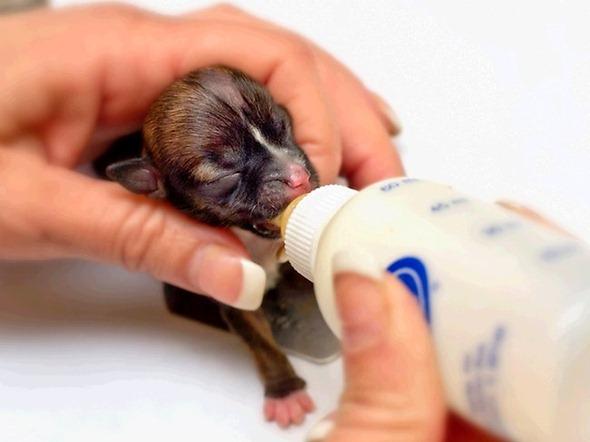 355835-tiny-puppy