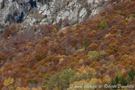 2-2014-11-01_Val di Mello (9)