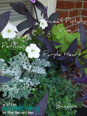 Window Box Flower Labels