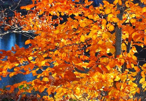 7. golden leaves-kab