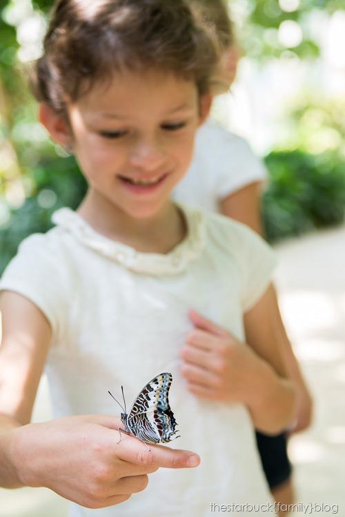 Callaway Gardens butterfly garden blog-15