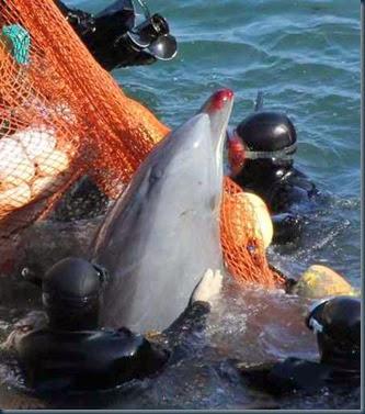 pesca-golfinho-no-japão