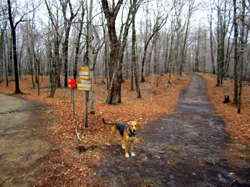 Start of trailhead. Trails free of leaves from late fall mowing.
