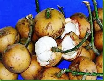 Baccaurea macrophylla