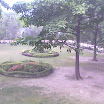 Pharmacy Garden of UCER