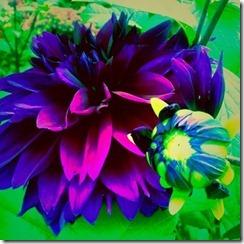 flor-tumblr-facebook-68