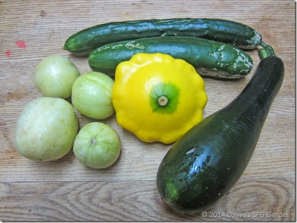 Squash_and_Cucumbers