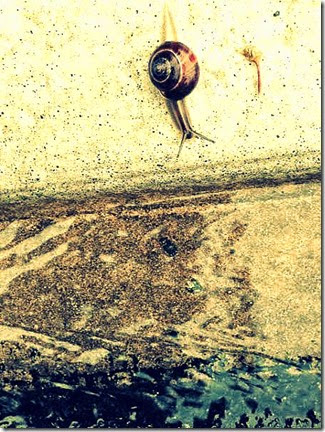 1-snail