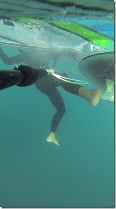 """""""En direct de la Calypso où le commandant Cousteau apperçoit un specimen étrange..."""