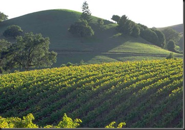 California Wine Country_Overview