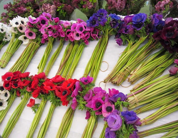 anemone IMG_0483 bow street flowers