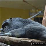 Heidelberger-Zoo_2012-04-09_795.JPG
