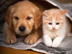 dog and cat 3-28-12 tlp