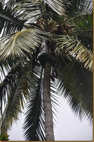 09.2011 Sierra Leone 2011-09-17 008
