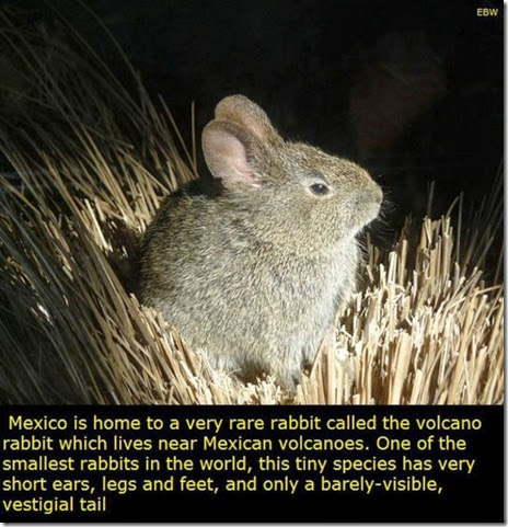 mexico-interesting-facts-017