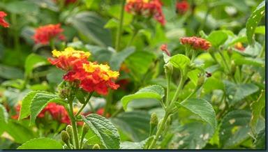 Ali's garden 026