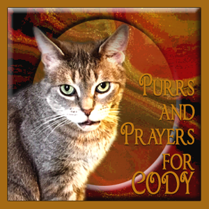 Purrs and Prayers for CODY