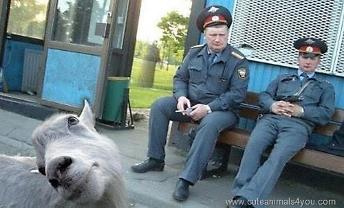 50_Funniest_Animal_Photobombs_Of_All_Time_07