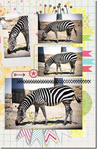 dettaglio zebra2