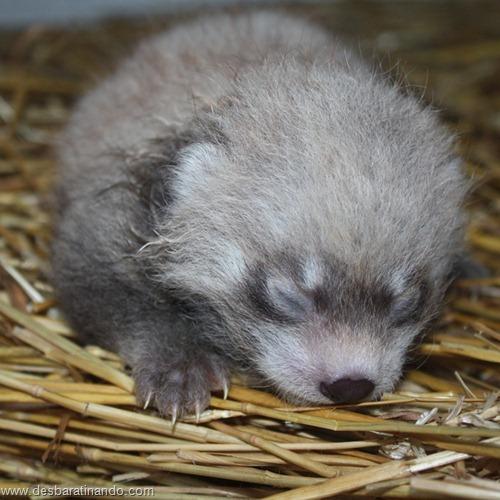 filhotes recem nascidos zoo zoologico desbaratinando animais lindos fofos  (40)
