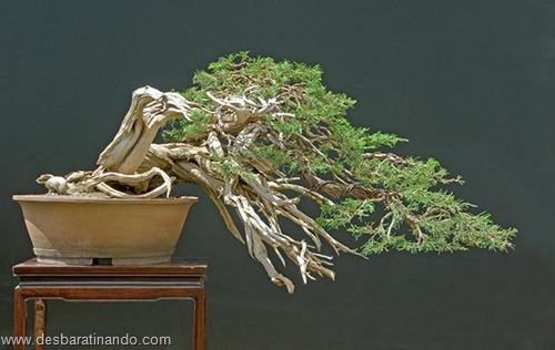 bonsais arvores em miniatura desbaratinando (72)